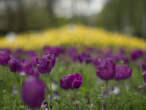 Coach tours to 2014 Canberra Floriade for Seniors - Photo