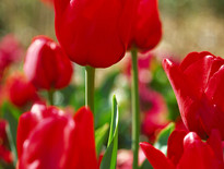 Group Coach tours to 2014 Canberra Floriade for Seniors from Brisbane - Photo