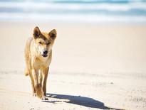 Christmas tours to Fraser Island & Hervey Bay - Photo
