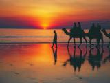 Small thumb cable beach broome camel trek