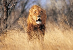 Escorted Tours to Africa from Australia - Image Courtesy Zambezi Queen