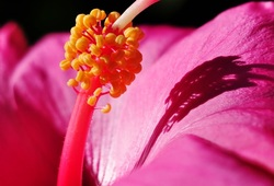 Norfolk Island Flower, Holiday Packages, Guided tours, Group tours from Brisbane